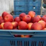 fruiticulteur-france