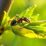 eloigner-fourmi-jardin