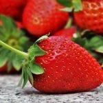 cultiver-fraises-ete