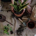jardinage-conseils